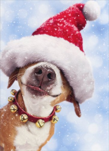 Big Dog With Santa Hat - Box of 10 Avanti Funny Christmas Cards