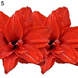 2 Pcs Amaryllis Bulbs Hippeastrum Seeds Home Balcony Garden Flower Plants Decor