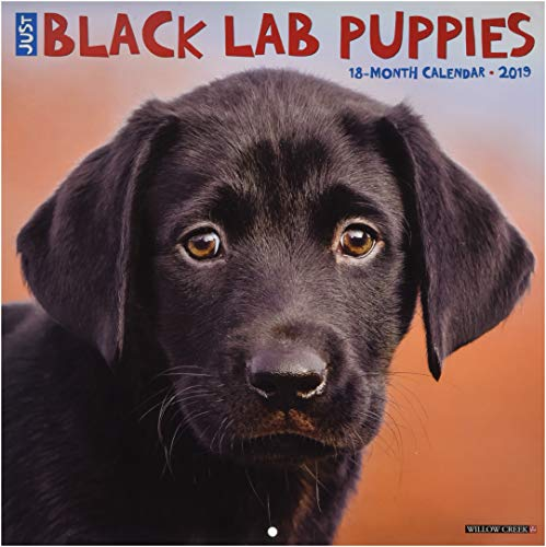 - Just Black Lab Puppies 2019 Wall Calendar (Dog Breed Calendar)