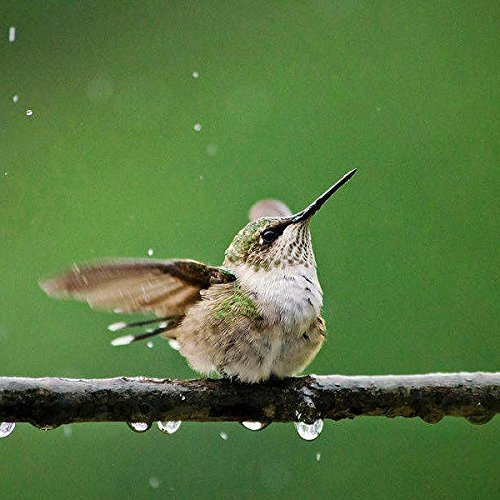 Bird Picture, Hummingbird In The Rain, Nature Print, Fine Art Photography, Cute Animal Wall Art Decor