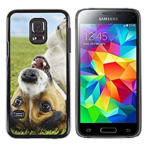 Impact Case Cover with Art Pattern Designs FOR Samsung Galaxy S5 Mini, SM-G800 Funny Cute Jack Russell Dog Puppy Betty shop