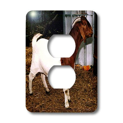 lsp_818_6 Farm Animals - Boer Doe Goat - Light Switch Covers
