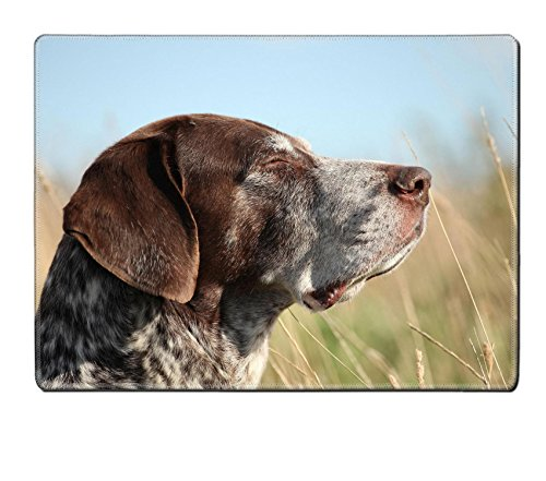 Luxlady Natural Rubber Placemat IMAGE ID: 23005244 Portrait of a German Shorthaired Pointer walking in the grass