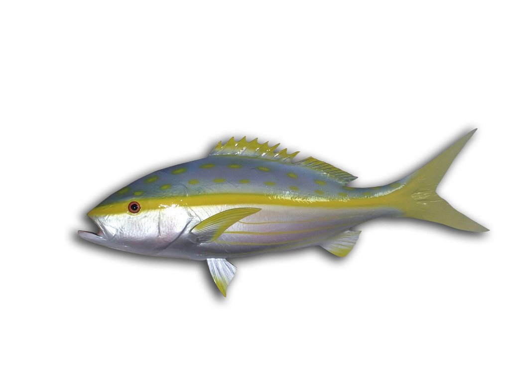 27'' Yellowtail Snapper Half Sided Fish Mount Replica, Affordable Coastal Decor - Indoors Or Outside.