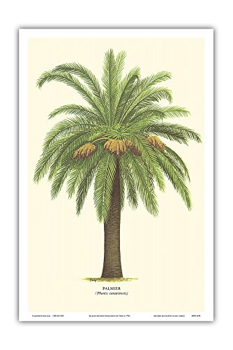 Tour Dates Poster (Canary Island Date Palm Tree - Palmier (Phoenix Canariensis) - Vintage Botanical Illustration by Ferry c.1770s - Hawaiian Master Art Print - 12 x 18in)