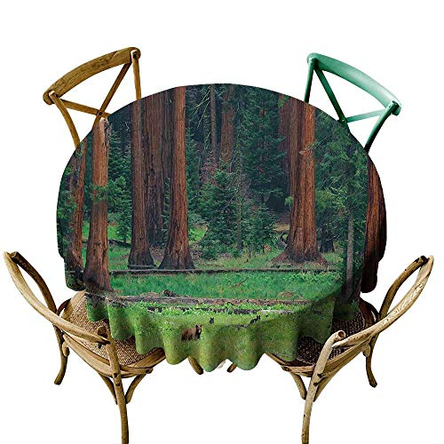 Jbgzzm Oil-Proof and Leak-Proof Tablecloth National Parks Home Decor Baby Bears on Field in Nature Area Recreation Rest Sequoia Tree Party D39 Green -