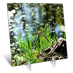 3dRose Alexis Photography - Seasons Spring - Old Tree Stump and Fresh Green Grass on The Lake Shore on a Sunny Day - 6x6 Desk Clock (dc_290823_1)