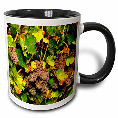 (3dRose Danita Delimont - Richard Duval - Grapes - USA, Washington, Yakima Valley. Pinot Gris grapes ripen. - 15oz Two-Tone Black Mug (mug_191777_9))