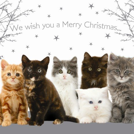merry christmas cats kittens christmas cards pack amazoncouk kitchen home - Merry Christmas Cat