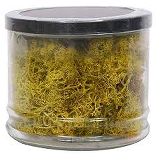 threshold-vase-filler-moss-4-pack-of-141-oz-each