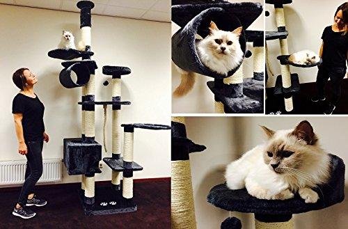 Rascador y centro de actividades para gatos grandes que se ajusta al techo.