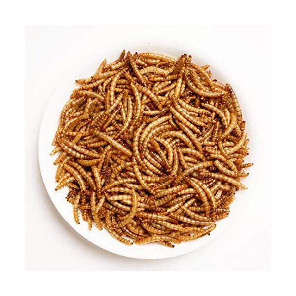 Amzey Dried Mealworms 11 LBS - 100% Natural for Chicken Feed, Bird Food, Fish Food, Turtle Food, Duck Food, Reptile Food, Non-GMO, No Preservatives, High Protein and Nutrition 2