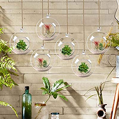 Creative Fashion Botanical Glass containers, Modern Decorative Glass pots, hydroponic Glass containers, for Home Office and Center Decoration (6 Pack): Garden & Outdoor