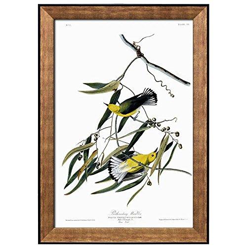 Beautiful Illustration Inside of an Elegant Frame of a Prothonotary Warbler by John James Audubon Framed Art