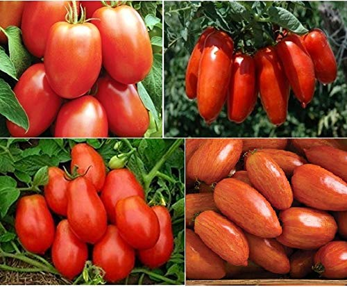 David's Garden Seeds Collection Set Tomato Paste Roma Open Pollinated SL9242 (Multi) 4 Varieties 200 Seeds (Non-GMO, Organic, Heirloom, Open Pollinated)