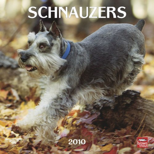 Schnauzers 2010 Square Wall