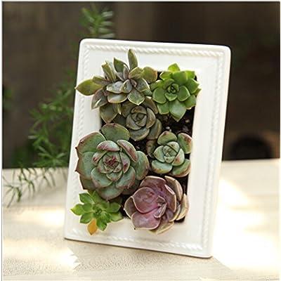 Mecai Modern Minimalist White Ceramic Succulent Planter Pot Window Box 6 inch(Photo Frame Type) : Garden & Outdoor