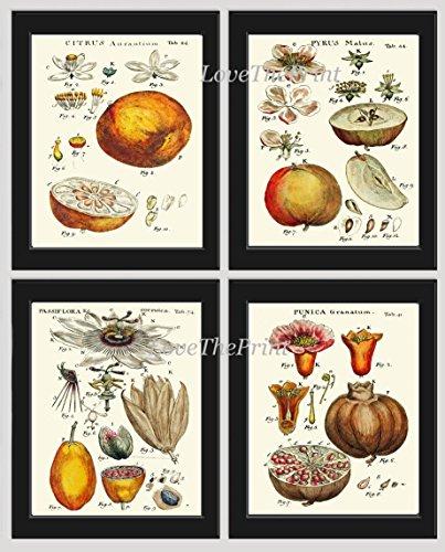 Italian Apple Collection - 7