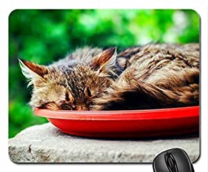 Cat Cute Cool Decorative Design Animal Cat Mousepad Rainbow Designs