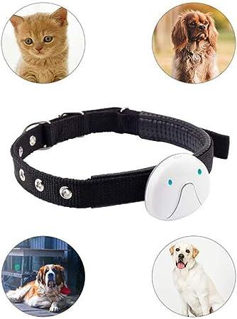 collier pour chien intelligent