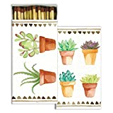 Colorful Succulent Cactus Plant Matches | Set 10 Botanical Potted