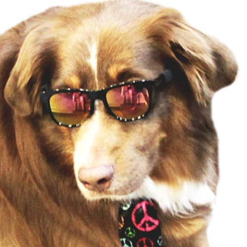 G006 Dog pet 80s mirror lens sports Sunglasses glasses goggle for M~L Dogs 20lbs & over (Black-gold mirror lens, clear)