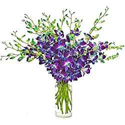 Premium Fresh Cut Flowers -Blue Dendrobium Orchids for Valentine's Day (20 Stems Orchid with Vase)