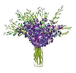 20 Stems Blue Dendrobium Orchids with Vase