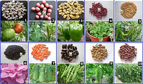 Beau Seedstores : Hybrid Vegetable Seed Kit 1 For Kitchen Terrace Poly House  Gardening 10 Items: Amazon.in: Garden U0026 Outdoors