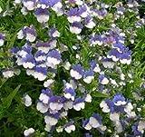 Nemesia Blue & White seeds - Nemesia strumosa