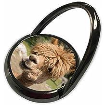 3dRose Danita Delimont - Canada - Canada, New Brunswick. Garden, barnyard alpaca in the petting zoo. - Phone Ring (phr_226907_1)