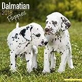 Dalmatian Puppies Calendar - Dog Breed Calendars - 2017 - 2018 wall Calendars - 16 Month by Avonside