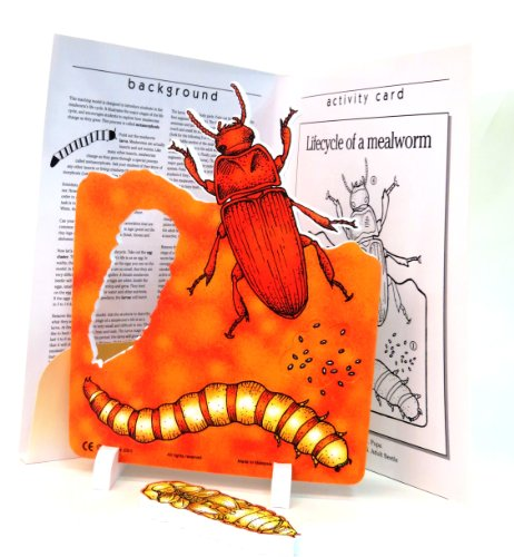 Mealworm Life Cycle (ETA hand2mind Life Cycle Of A MealWorm Model)