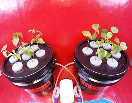 Aeroponic Rooting Machine (14 Site Indoor Plant Cloning System - Uses Aeroponics Air Bubble Technology - Everything You Need!)