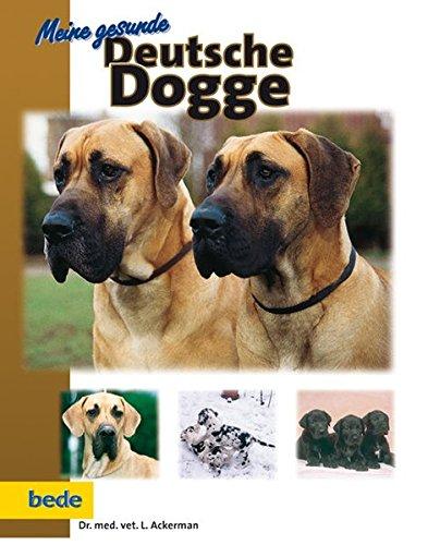 Meine gesunde Deutsche Dogge