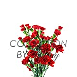 Mini Carnation Fresh Flower Long Lasting Vase Life
