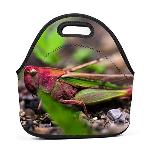 Lwbd bug-QW4177315 Insulated Neoprene Lunch Bag Tote Handbag lunchbox Food Container Gourmet Tote Cooler warm Pouch For School work - Lunch Bug