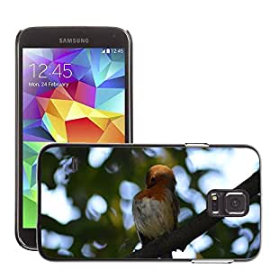 Etui Housse Coque de Protection Cover Rigide pour // M00134231 Red Robin Aves Robin // Samsung Galaxy S5 S V SV i9600 (Not Fits S5 ACTIVE)