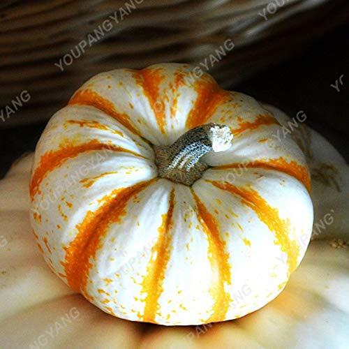 (Ornamental Pumpkin Plants | Colorful Cucurbita Pepo Organic Decorative Pumpkin Fruit Vegetable Plants for Home Garden (20pcs))