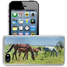Luxlady Apple iPhone 5/5S Clear case Soft TPU Rubber Silicone Bumper Snap Cases iPhone5/5S IMAGE ID 30717326 Horses in the mountains equine nag hoss hack dobbin a solid hoofed plant eating domesticate