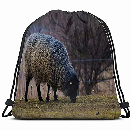 Gotland Sheep On Meadow Typical Swedish Animals Wildlife Animal Drawstring Bag Backpack Gym Dance Bag Reversible Flip Sequin Bling Backpack For Hiking Beach Travel Bags