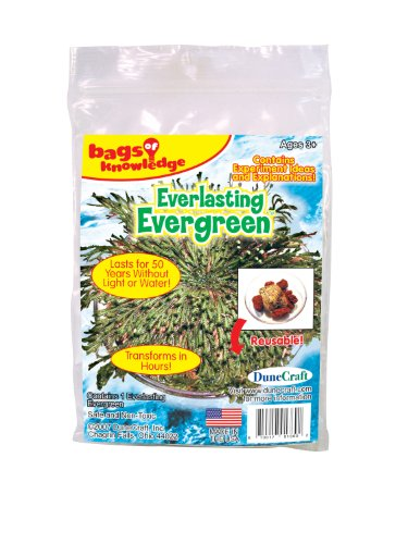 DuneCraft Everlasting Evergreen Science Kit, Red, Yellow or Blue Tablet