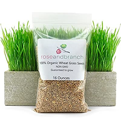 Wheat grass Seeds, Cat Grass seeds, 16 ounces- 100% Organic NON GMO - Hard Red Wheat. Harvested in the US. Guaranteed to grow.