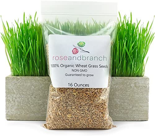 Organic Wheat Grass Seeds Ounces product image