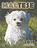 Maltese 2018