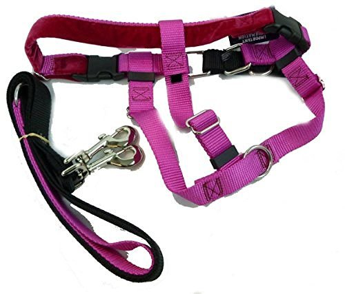 2 Hounds Design Freedom No-Pull Dog Harness Training Package, Medium (1'' wide), Raspberry