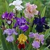 Van Zyverden Iris Germanica Breeder's Choice Mixture Set of 7 Roots