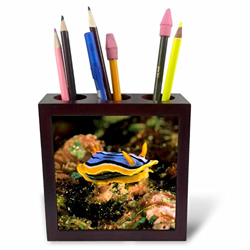 3dRose ph_84127_1 Close up of Nudibranch, Marine Life - NA02 MWT0008 - Michele Westmorland - Tile Pen Holder, 5-Inch