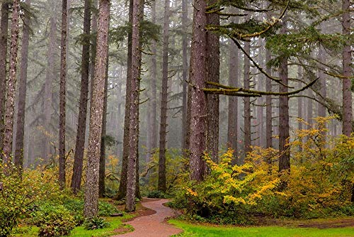 Forest Fog in Sliver Falls State Park, Oregon by Chuck Haney/Danita Delimont Art Print, 12 x 8 inches