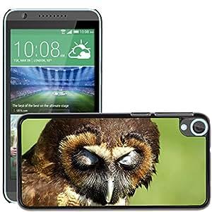 Hot Style Cell Phone PC Hard Case Cover // M00111604 Owl Owl Sleeping Owl Close Bird // HTC Desire 820